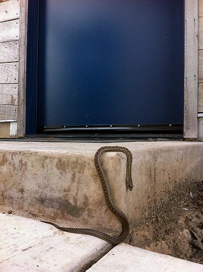 snakeonstep